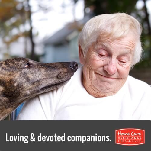 Benefits of Pets for Elderly